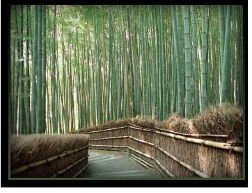 WDS Designer Natural Shades Eco Friendly